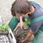 jungspflanzen-auf-dem-weg-in-den-boden