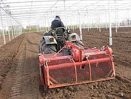 Angebaut wird ausschließlich in Erde; chemische Dünger sind tabu