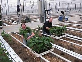 Alle Pflanzen werden aus Bio-Saatgut nach ökologischen Richtlinien gezogen