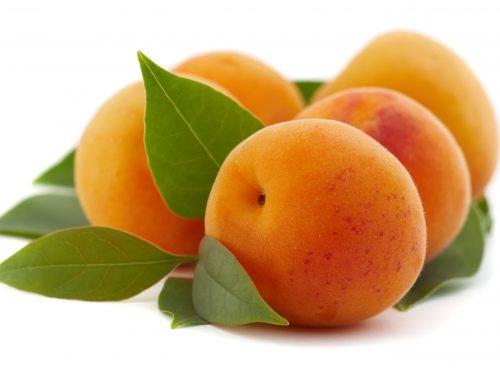 Aprikosen – frisch für Euch gepflückt!