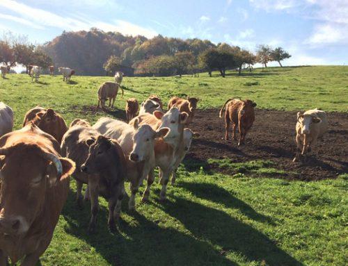 Neu: Bio-Rindfleisch vom Bauernhof Frey