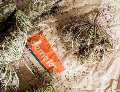 Samenfestes Saatgut – Natürlichkeit ist unsere Zukunft