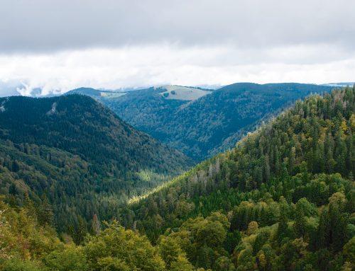 Wälder retten!